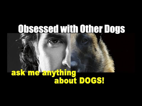 My Dog is Obsessed with Other Dogs - Dog Training Video - ask me anything