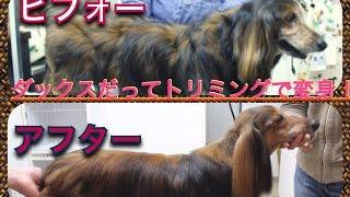 駒沢 美容室 ワイルア https://www.wailua-hair.com 03−6450−77...