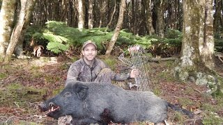 NZ Bow Hunting- Tipping Pigs