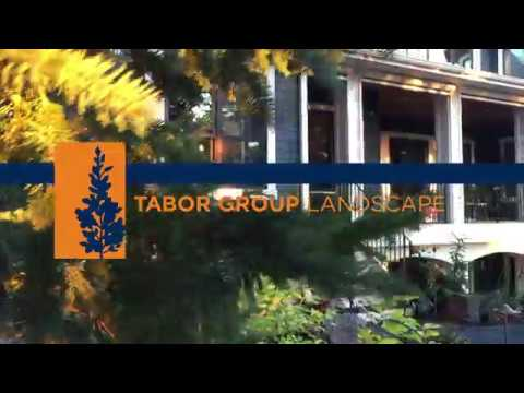 Tabor Group Landscape - Fall 2017
