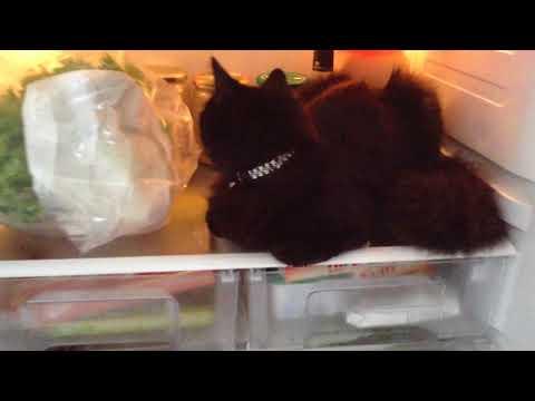 Buzdolabında Ne Var ?