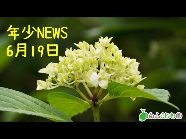 20200619 年少NEWS 特集 動物