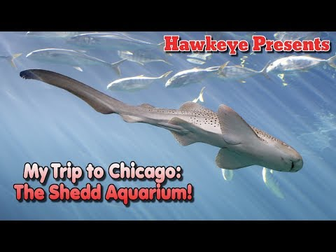 Hawkeye Presents - My Trip to Chicago: The Shedd Aquarium!