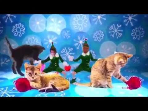 Kitty Christmas Fun!   Two Crazy Cat Ladies