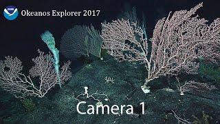 深海ミステリー。緑色の何かに包まれたうす紫の卵のようなこの物体の正体は何なの?