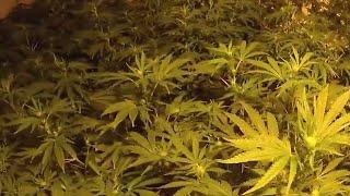 video: Watch: Three jailed after police raid cannabis farm