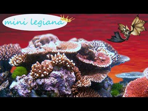 Monster Hunter world miniature crown Legiana ( non Event )