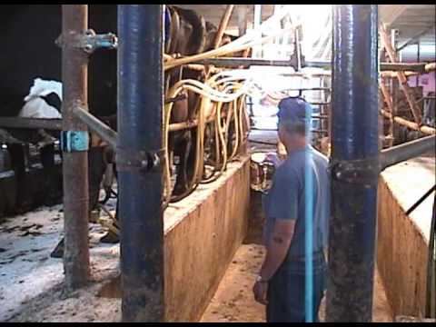 Dahlberg low cost milking parlor youtube for Arredamenti low cost