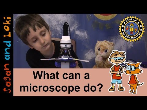 Cool Things in a Kids' Microscope🔬Homeschool Science Ideas💡Microscope Lessons for Kids | Ep.1