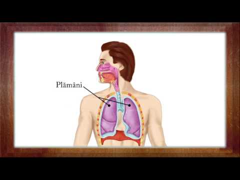 Biologie Clasa a 6-a Lectia: Functiile de nutritie from YouTube · Duration:  4 minutes 16 seconds