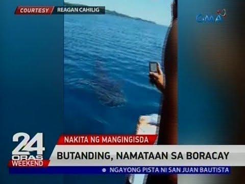 24 Oras: Butanding, namataan sa Boracay