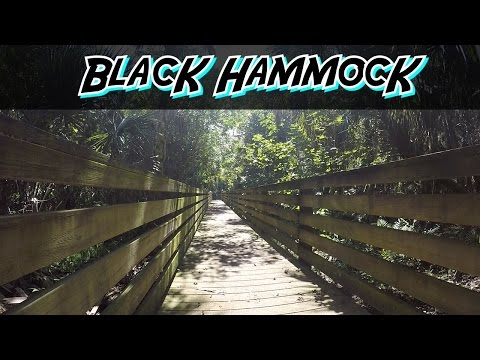Hiking: Black Hammock Wilderness Area | AdventuresHD