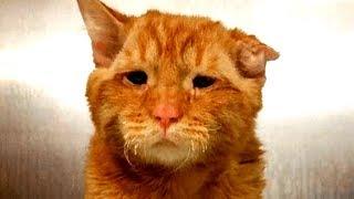 Traurige Katze sollte eingeschläfert werden, doch dann passierte das...