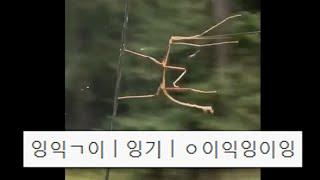 대나무벌레 똥꼬쇼 웃음참기 9