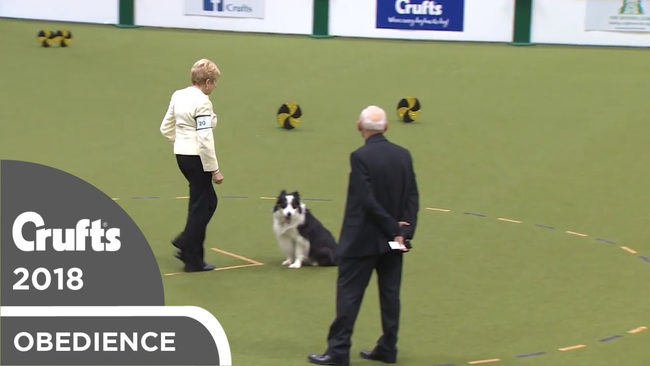 Obedience - Dog Championship - Part 20   Crufts 2018