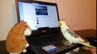 Говорящий хомяк и попугай Арчи(, 2015-07-24T10:21:03.000Z)