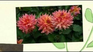 Plant Whatever Brings You Joy book trailer