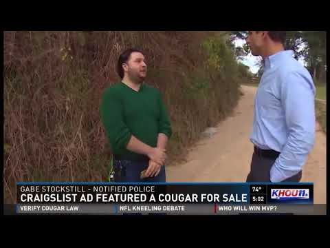 Cougar for sale featured on Craigslist ad from YouTube · Duration:  2 minutes 31 seconds