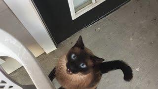 видео Осторожно Умирают кошки Whiskas