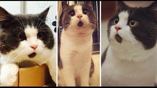 Kompilasi Video Kucing Lucu Terbaru 2015