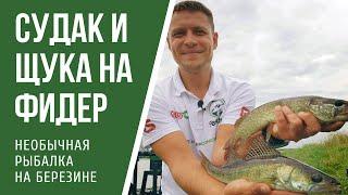 Ловля фидером на Березине. Необычная рыбалка в Беларуси.