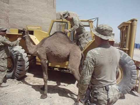 Shawn Riding A Camel in Afghanistan