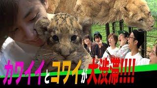 SixTONES【10万円アポなし旅】1泊2日弾丸バスツアー第3弾! thumbnail