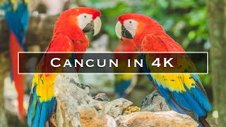 Cancun in 4k