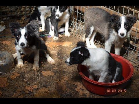 RSPCA Puppy Farm Rescue