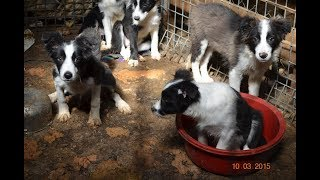 RSPCA Puppy Farm Rescue