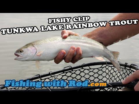 Tunkwa Lake Rainbow Trout | Fishing With Rod