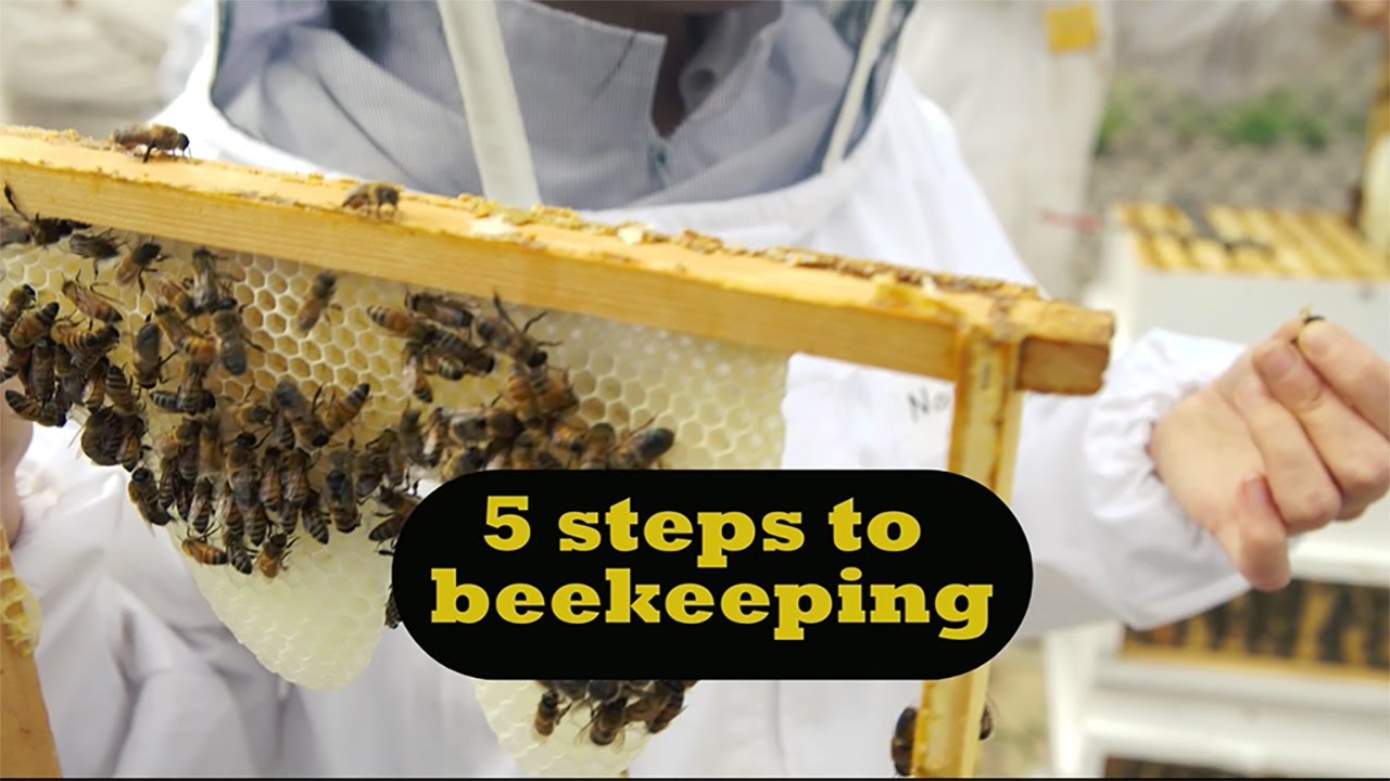 Five Steps To Beekeeping For Beginners YouTube - Backyard beekeeping for beginners