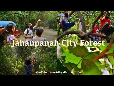 Jahanpanah City Forest - a Nature Walk