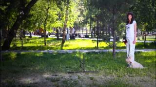 """Как научить собаку команде Барьер. Дрессировка собак в Новосибирске. Кинологический центр """"БАРС"""""""