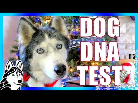 DOG DNA TEST RESULTS | Day 8 of 12 Days of Giveaways 2016 🎄 Oakley and Shelby