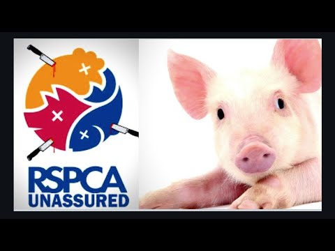 Shocking Animal Welfare Standards, RSPCA Assured