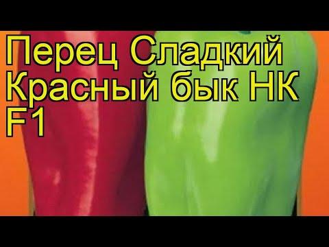Перец сладкий Красный бык НК F1. Краткий обзор, описание характеристик cápsicum ánnuum | описание | сладкий | краткий | красный | перец | обзор | бык | psicum | nnuum | сл