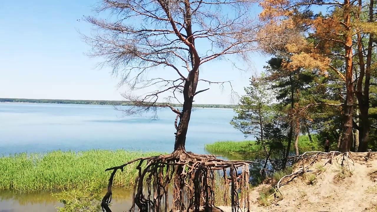 Чудо-дерево 🌎Печенежское водохранилище