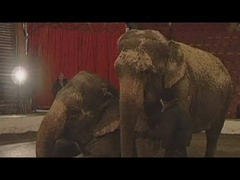 Vodka saves frostbitten elephants from freezing to death in Siberia
