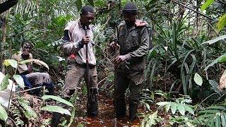 اكتشاف منطقة من التربة المتحللة في أدغال حوض الكونغو