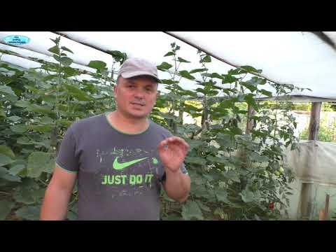 Сад и огород своими руками видео