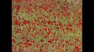 Çanakkale,Biga,gelincik çiçeği
