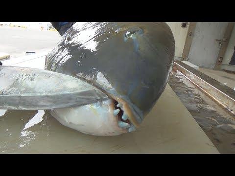 【青い宝石の魚】最強の焼き魚と骨まで食べる方法がこれだ!