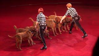 Circus. The show dogs. Цирк. Шоу собак.
