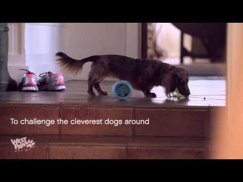 Zogoflex Toppl West Paw Desigm Juguete Interactivo para Perro - Mascositas