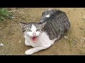 Funny Cats Vedeo video