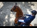 Gambar cover Unstoppable//Showjumping