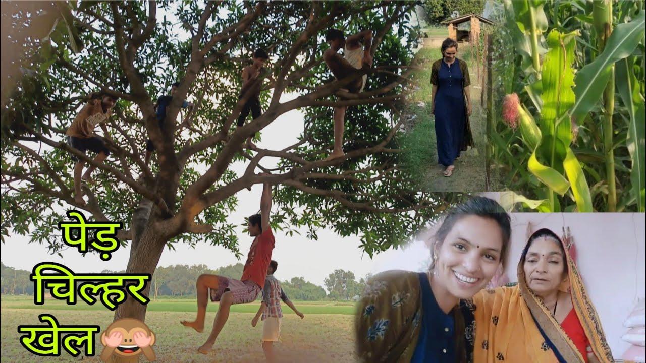 My Village Lifestyle🤦🙈जोनहरी का खेत पेड़चिल्हर खेल इस वीडियो को देख बचपन न याद आ जाये तो कहना