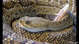 Интересные картинки про змей