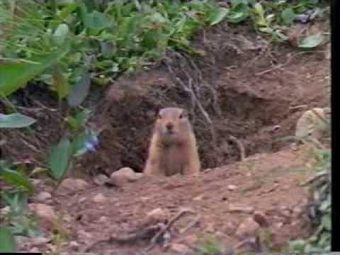 Reader's Digest Presents: Alaska's Great Wilderness - Denali   1997   VHS rip